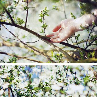 """""""Springtimes"""" by: gloeckchen"""